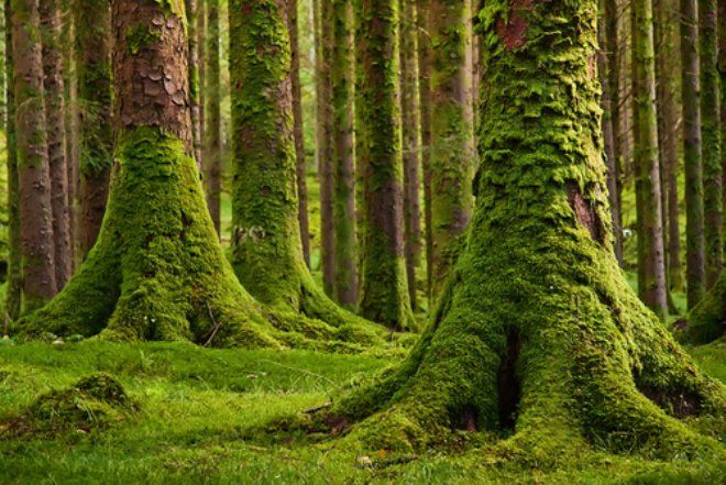 moss and moss and more moss