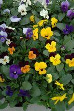 Pot- & Perkplantenkwekerij ZUIDBAAK