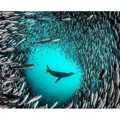 Amazing....ocean life.