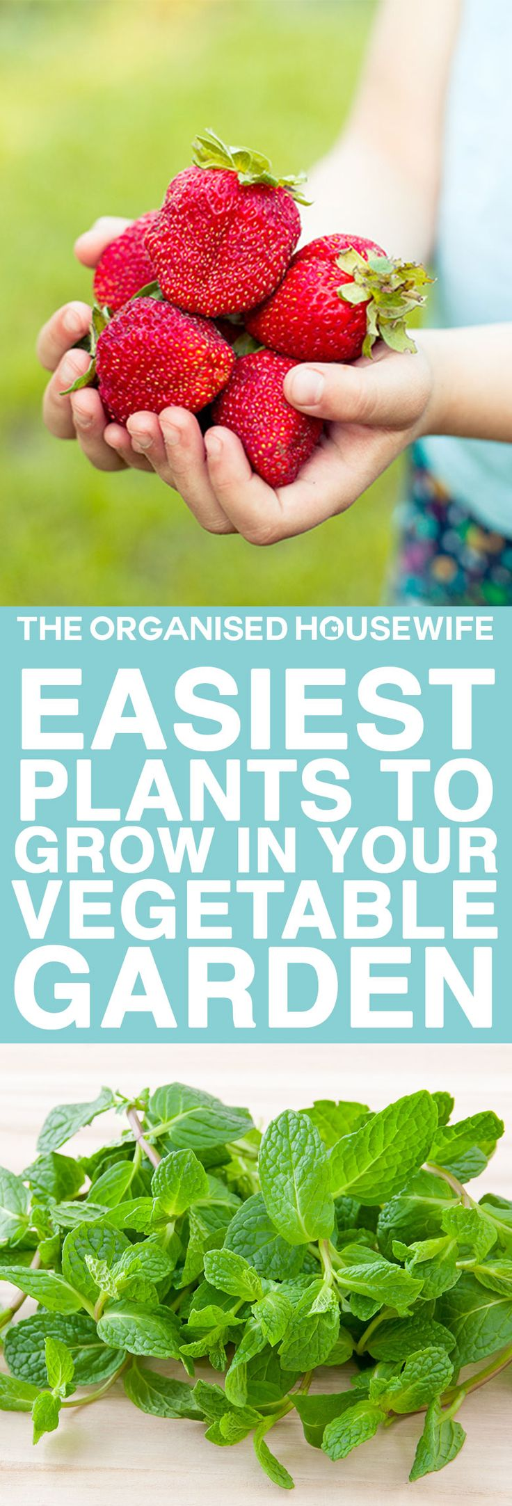 Starting a vegetable garden isn't difficult. I have had fun creating mine, it is something my son, and I do together, it's great bonding time.  I encourage you to give it a go, even if it's just one pot with a single herb!! I've put together my top tips on the easiest plants to grow and how to care for them.
