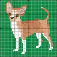 Chihuahua (korthårig)