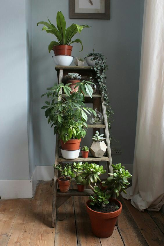 Cool houseplants tower