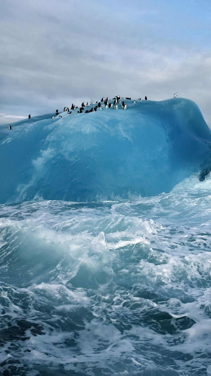 Antarctica, Penguins,