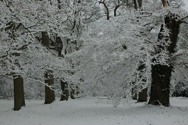 The Avenue in Snow by markarc, via Flickr