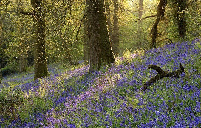 Pin By Kathleen Burke On Squills Landscape Photography Bluebells Garden Landscape Photography Tips