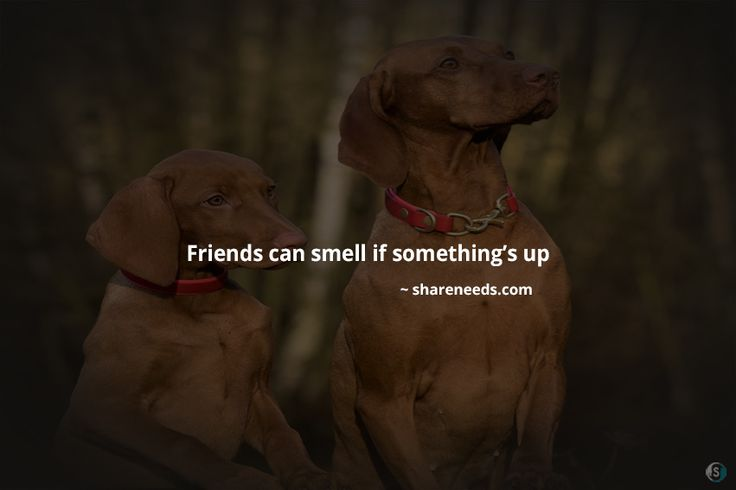 Friends can smell if something's up  #friendshipquotes