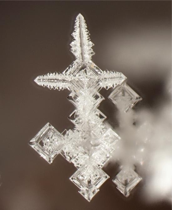 Natural forming mineral crystal. Salammoniac dendrites from Huron River near Milan, Ohio