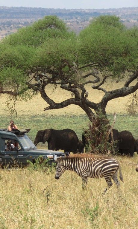 8 Great African Safari Lodges You Haven't Heard of Yet: Gold List 2016