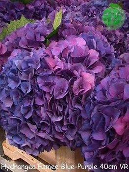 Wedding, Flowers, Purple, Blue, Centerpiece