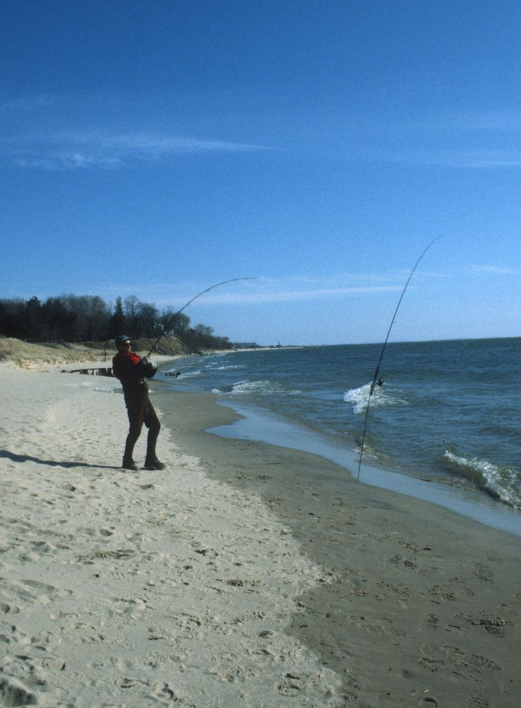 44 best images about surf fishing on pinterest bait and for Surf fishing bait