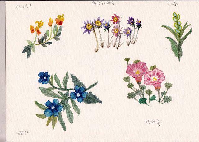 FLOWER FLOWER: 야생화가 좋다....수채화로 그려보기 (watercolor wild flowers/cat ...