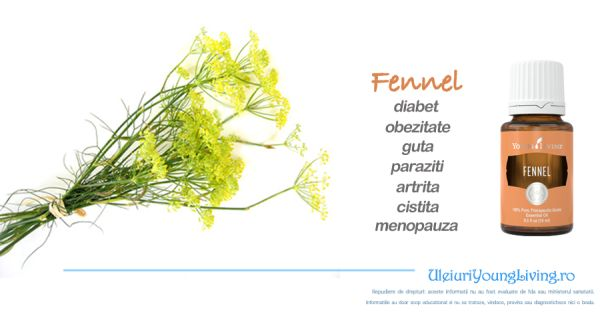 Ulei Esential de Fennel / Fenicul / Chimen Dulce - Uleiuri Esentiale Young…