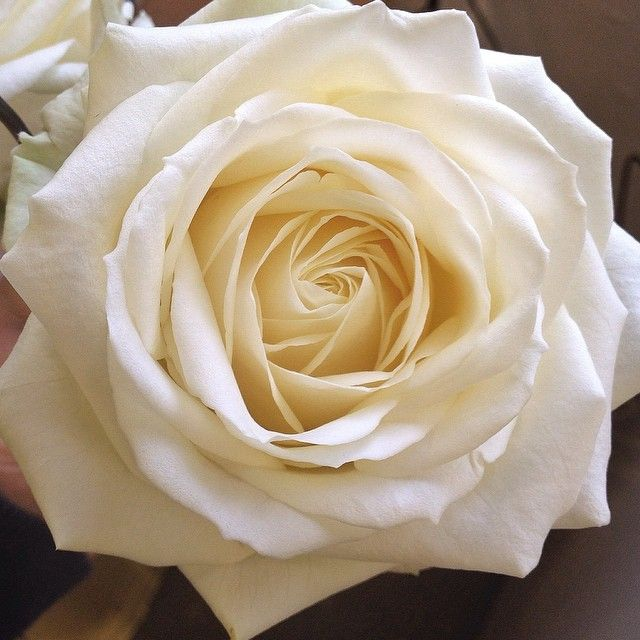 Rose Avalanche E Ortensie : Best images about roses for cut flower industry on