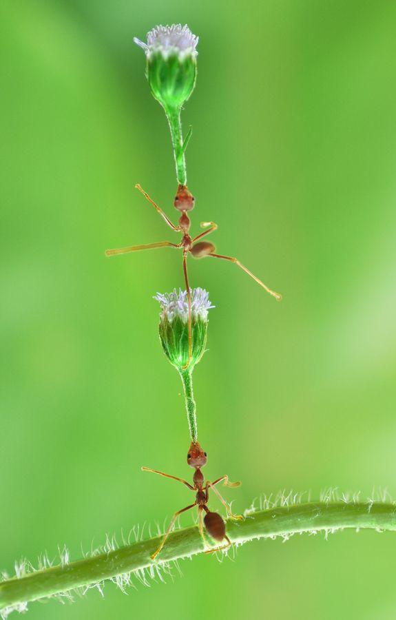 """500px / Photo """"acrobat"""" by chandra wiratno"""
