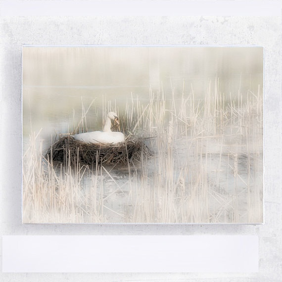 Swan Nesting 5x7 Canvas Print on Wood Block  Labour of by PeyLu,Wood Block, Canvas Prints, 5X7 Canvas