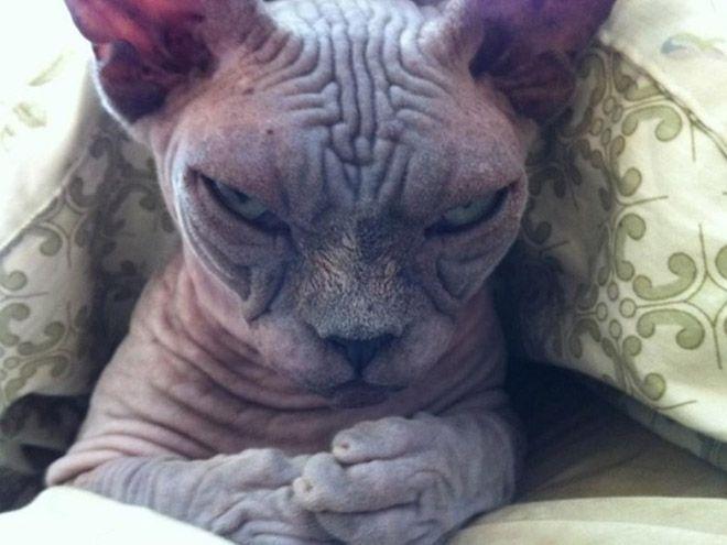 """Wenn Blicke töten könnten, dann würde so manch Katzenbesitzer schon längst das Zeitliche gesegnet haben. Diese 12 Katzen sind wohl die schlecht gelauntesten ihrer Art! Einfach """"süß""""!"""