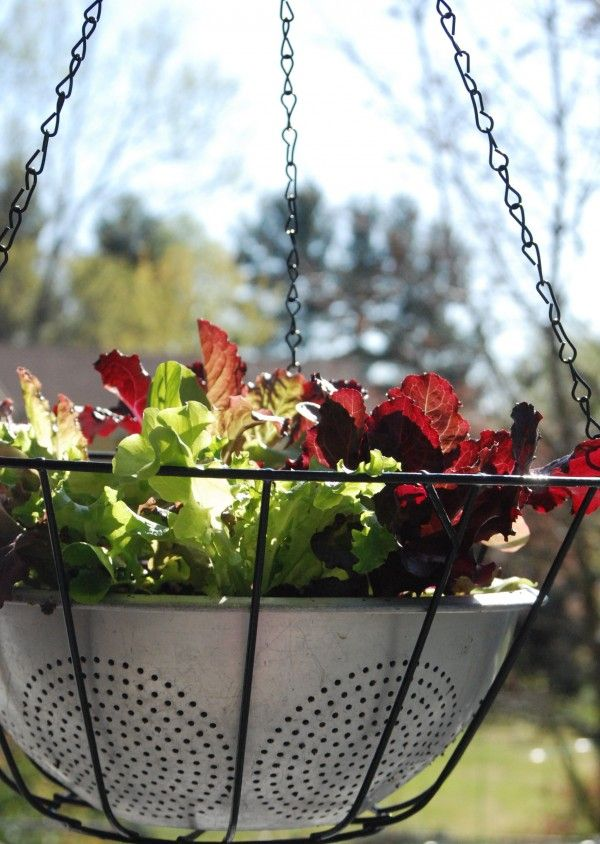 How To Make A Hanging Basket Flowers : Best images about patios plants pots baskets on