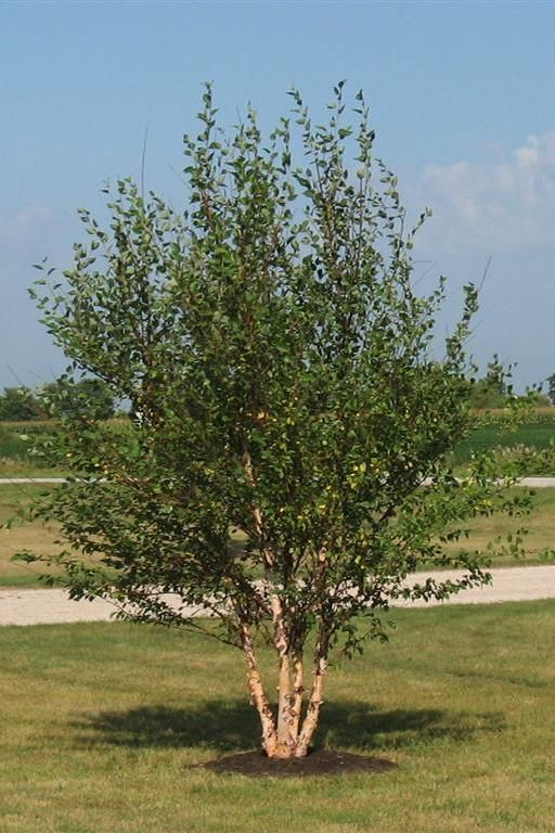 Varities and All Types of  Trees   www.itrees.com