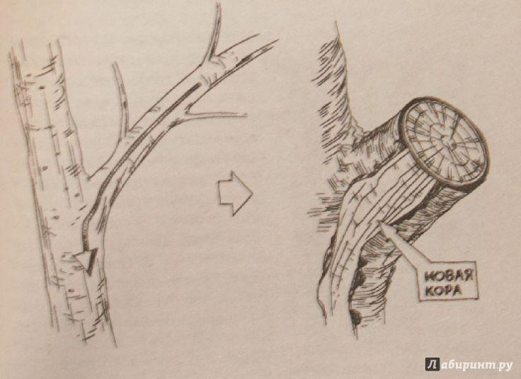 Иллюстрация 3 из 12 для Умный сад в подробностях - Николай Курдюмов | Лабиринт - книги. Источник: Остапчук  Дарья