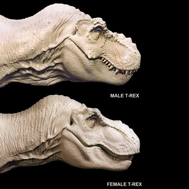The Lost World: Jurassic Park » Male T-Rex and Female T-Rex - Sculptures by Stan Winston Studio.