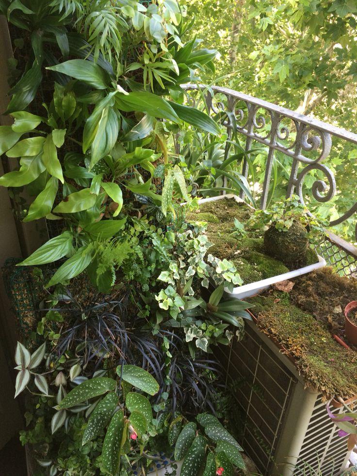Vertical Garden of Sphagnum moss in balcony. Floravertical.com
