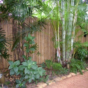 Bamboo Screen to hide chain link fence