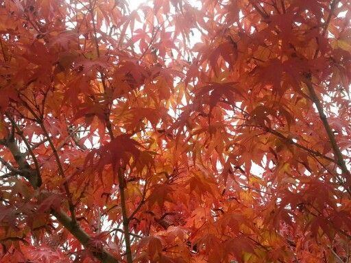 가을..단풍 만끽중..금산 군북초등학교