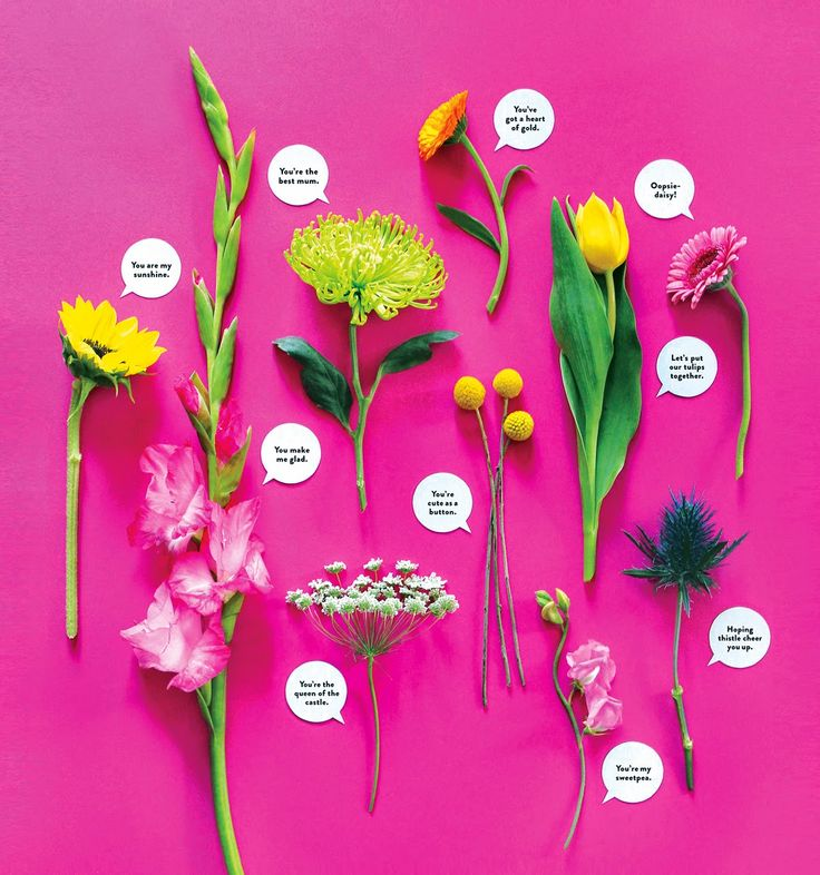 cute flower pun bouquets: 'You make me glad,' 'You've got a heart of gold,' 'Hoping thistle cheer you up'