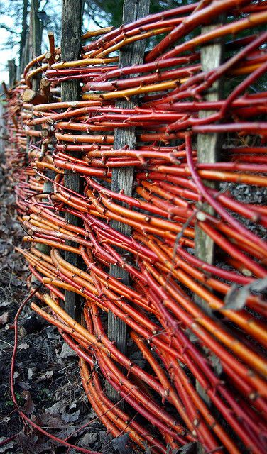 Woven fence with red dogwood branches, honeysuckle branches work well too, for a natural colour.