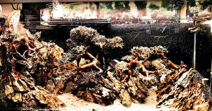 Is it good????????#plant#plants#aquarium#plantaquarium#nature#natureaquarium#green#moss#plants#aqua#aquaman#aqualover#aquascape#aquascapingworld #contest#match#world#people#mankind#univesal#color#colors#fish#shrimp#crab#redshrimps#amanoshrimp#ada#co2#tree#trees#