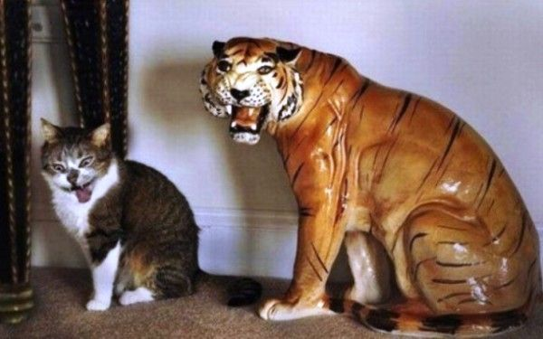 Copy Cat Family Funny Illusion Picture | Funnyho.com
