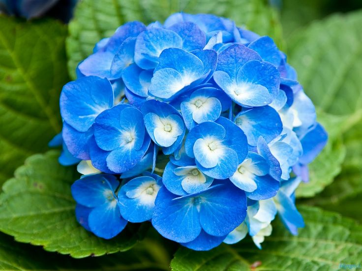 Light Blue Flowers Bouquet All The Gallery You Need Phenomenal Blues Pinterest Flower Pictures Meanings And