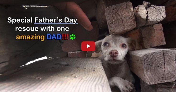 Fueron buscando a la madre de los cachorros y se encontraron esta sorpresa