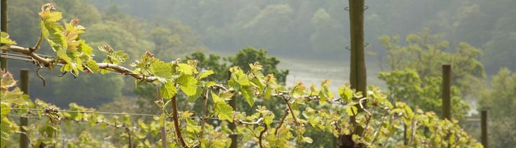 Sharpham Vineyard English Wine and Cheese | England Wines