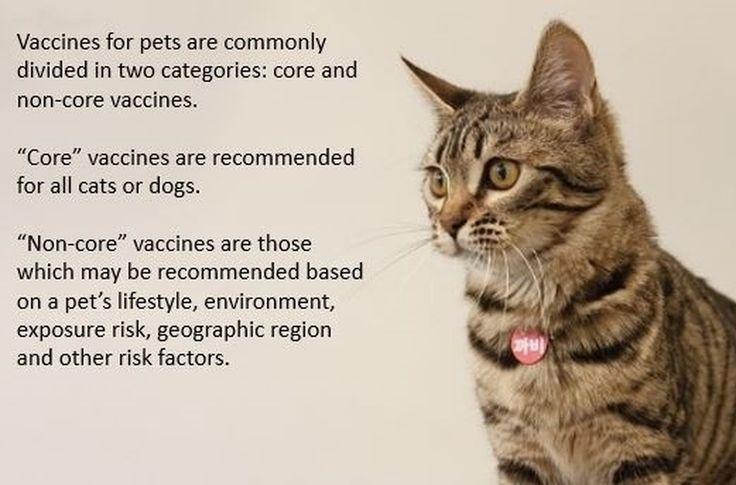 Core vaccines for cats include rabies feline panleukopenia feline calicivirus and feline rhinotracheitis (also known as feline herpesvirus). #Veterinarian #RochesterNY #PetPreventativeCare #Vaccine #Cats