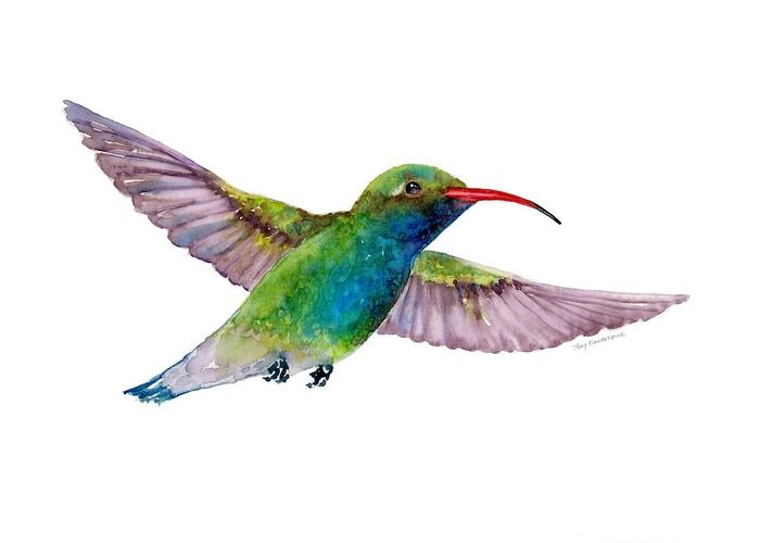 Let people know you care with this Greeting Card featuring the watercolor painting BROAD BILLED HUMMINGBIRD by Amy Kirkpatrick, $4.95 ea., 10-Pack $27 • AmyPrints.com