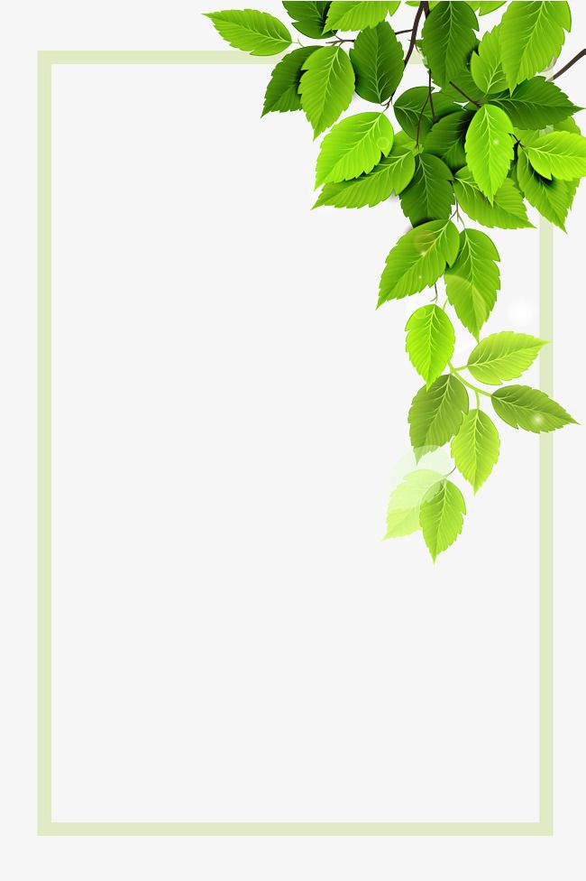 Vector Green Plant Borders Page Borders Design Plant Vector Floral Background