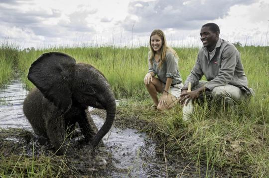 Baby elephant at Abu Camp (Okavango Delta, Botswana). Wanna visit that fantastic place? Just let us know: info@gondwanatoursandsafaris.com