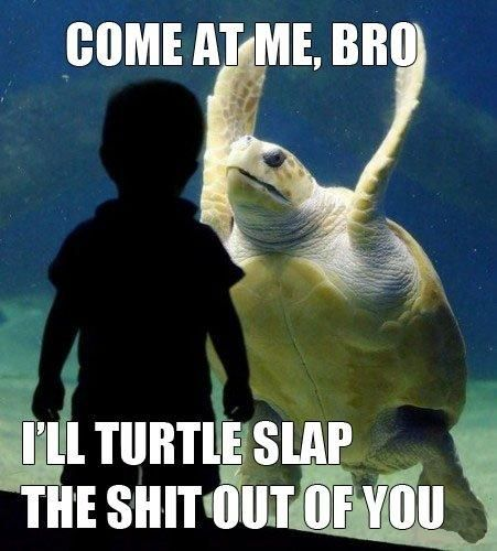 Come at me, bro!: Funny Things, Turtles Slap, Books Jackets, Funny Shit, Giggl, Funny Stuff, Funnystuff, Sea Turtles, Animal