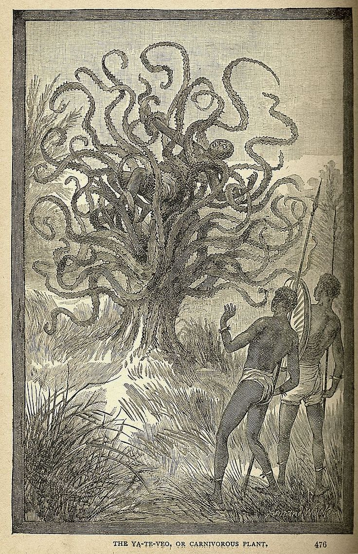 """The 'Ya Te Veo' (""""I see you"""") carnivorous tree, Africa and Central America, from Sea and Land by J. W. Buel, 1887 ... Cryptobotany -  See Also: https://en.wikipedia.org/wiki/Cryptobotany"""