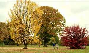 Outono transforma as paisagens de Londres