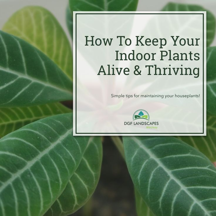 How To Keep Your Indoor Plants Alive & Thriving   DGF Landscapes Mackay