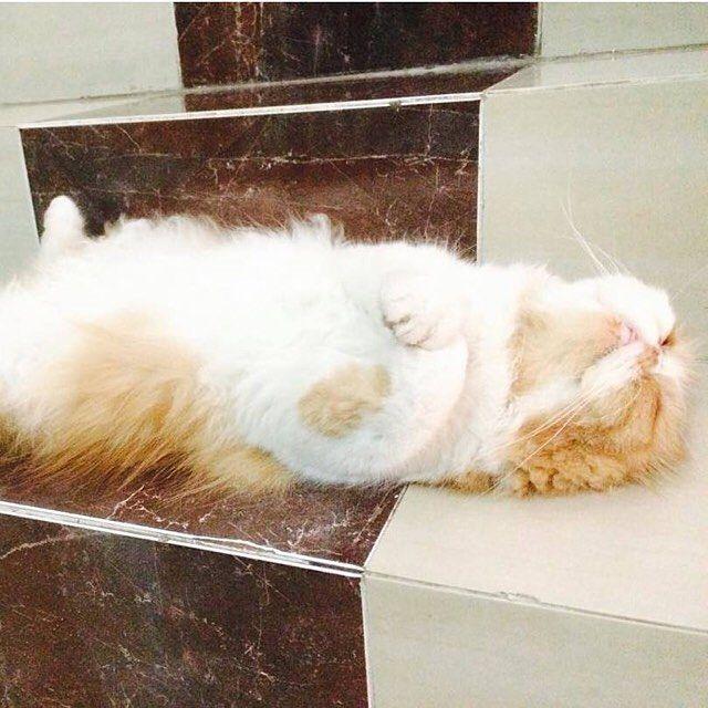 Nap stairs #nap #bestfriends #catstagram #gato #cat #instapets #catsofinstagram #catlover #instacats #happy #catlife #textgram #sexycurve #kitty #pose #lifestyle