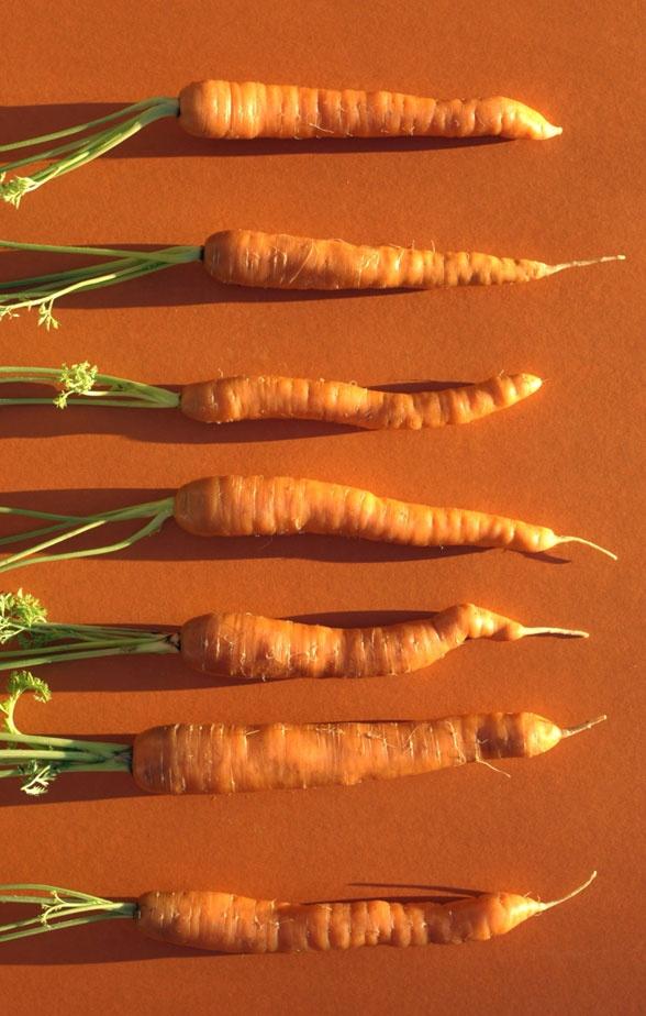 The dress original color of carrots