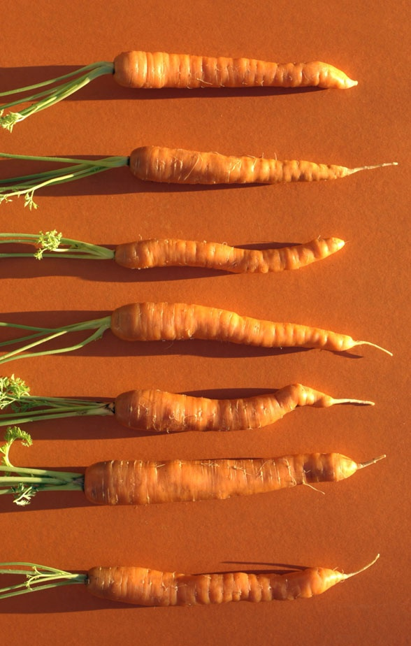 Carrot Growing tips