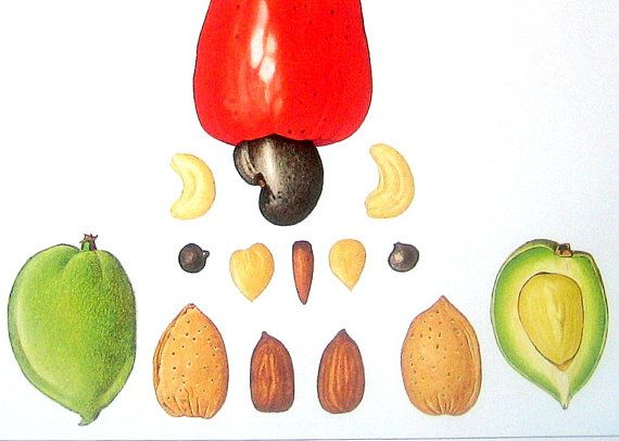 Cashew Nuts, Almonds, Filbert Nuts Print Bold bright vibrant colors, mouthwatering lifelike fruit print! 1991 Vintage Book Page from Cookbook Published in Great Britain Approximately 11.5 x 9. Back of page has text. In very good vintage condition with no tears, some slight