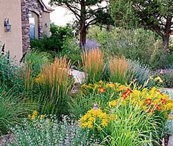 cottage-style xeriscape is fun and welcoming: Landscape Design, Gardens Xeriscaping, Front Yard, Horticulture Xeriscaping, Outdoor Gardens, Ornaments Grass, Plants Grass How, Gardens Outdoor, Plants Grasshow