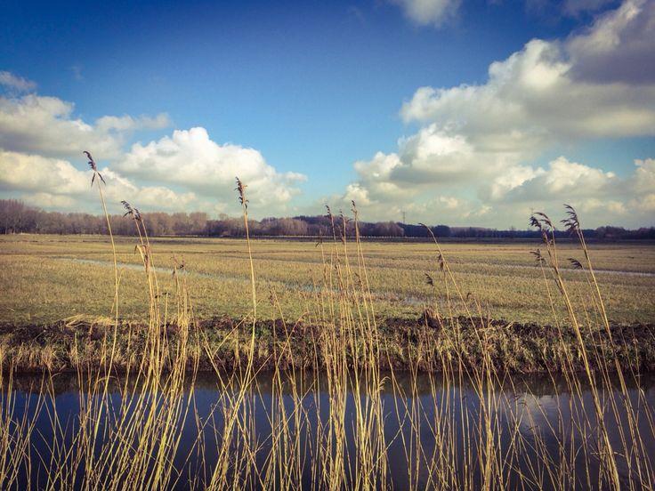 Biesbosch Nationaal Park