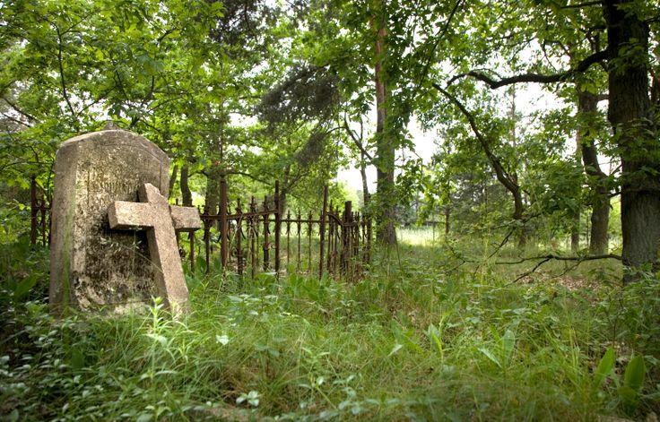 Cmentarz ewangelicko-augsburski w Celestynach. Gmina Malanów.