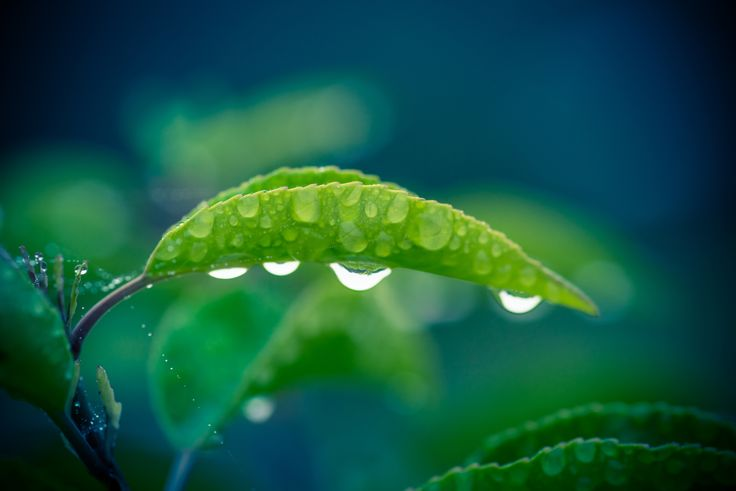 Green leaf with four raindrops by Kasper Nymann on 500px